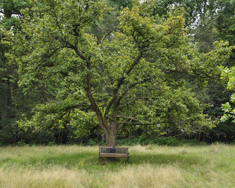 Bank vor Baum