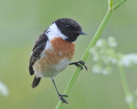 K Chen Borken natur und vogelschutzverein kreis borken e v suchergebnisse